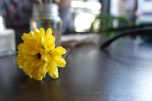 Codziennie świeże kwiaty